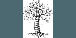Root's Chiropractic